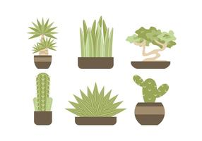 Free Evergreen Houseplant Vectors