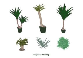 Yucca Plant Vector