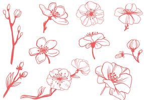 Free Blossom Vectors