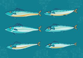 Set of Sardine or Pilchard with Vintage Style Vectors