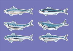 Vector Illustration for Artwork Sardine or European Pilchard