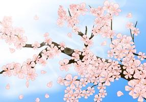 Peach Blossom In Shinny Day