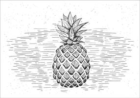 Free Hand Drawn Vector Pineapple Illustration