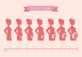 Vector Illustration of Pregnant Female Silhouettes