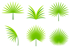 Palmetto Leafs Vector