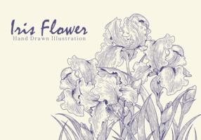 Free Hand Drawn Iris Flower Vectors
