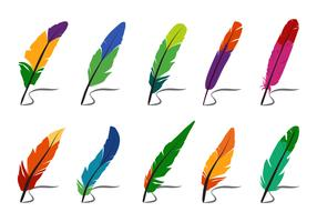 Colorful Feathers and Pluma Vectors