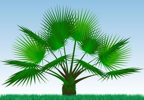 Single Palmetto Plant Vector