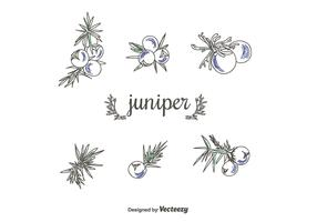 Hand Drawn juniper Vector Set