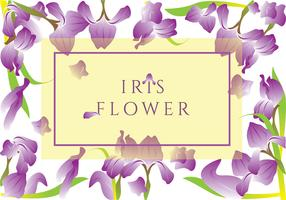 Iris Flower Greeting Card Vector