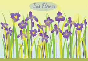 Iris Flower In The Morning Illustration