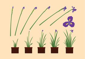 Iris Flower Grow Free Vector