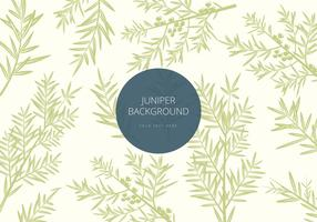 Free Juniper Background Vector
