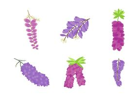 Free Beautiful Wisteria Flower Vectors