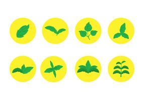 Stevia Leaf Vector