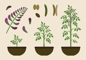 Licorice Plant Free Vector