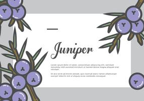 Juniper Gretting Card