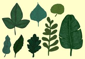 Vintage Style Botanical Leaves Vector Set