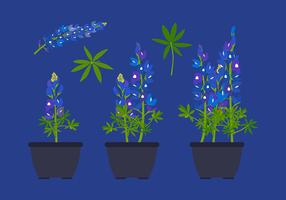 Bluebonnet Flower Plant Free Vector
