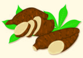 Vector Illustration Of Cassava
