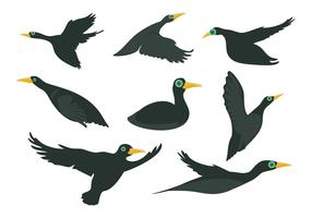 Free Black Loon Bird Vector