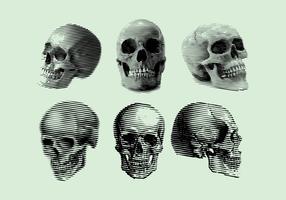 Gravure Skull Vector