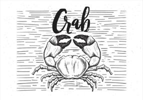 Free Vector Hand Drawn Crab Illustration