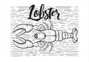 Free Vector Hand Drawn Lobster Illustration