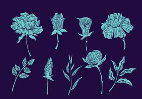 Collection of Gravure Style Illustration Flowers and Leaves