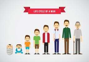 Lifecycle of a Man Vector