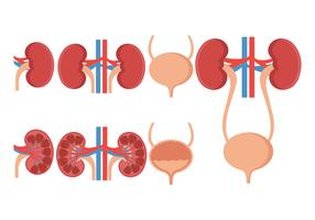 Urology Vector Icons Set