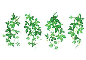 Set of Beautiful Vector Art Illustration, Poisson Ivy with Green Leafs, Framed Pattern