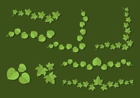 Flat Poison Ivy