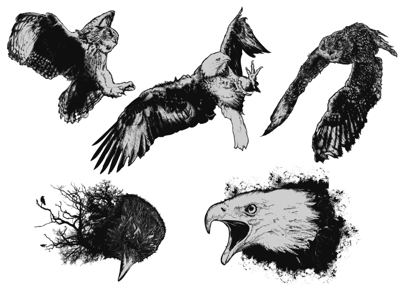 Birds-of-prey-vectors