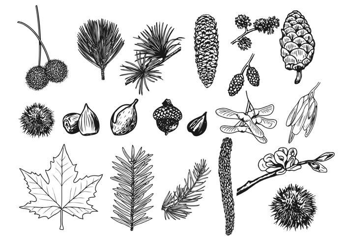Dingen in het bos vectorpakket