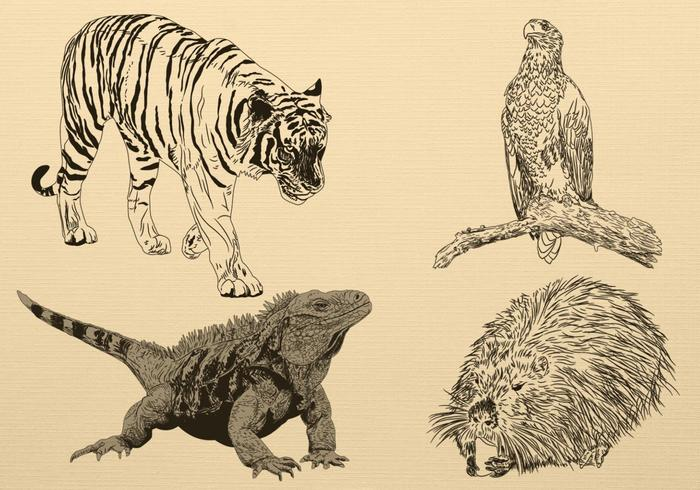 Handgezeichneter Tiervektor-Satz