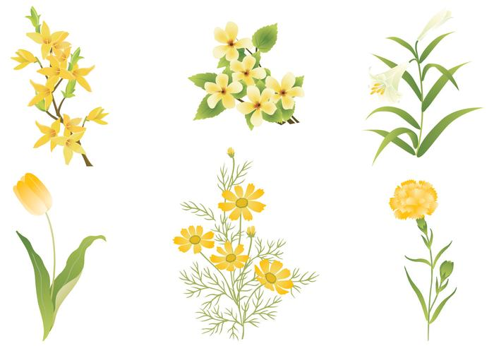 yellow-flower-vector