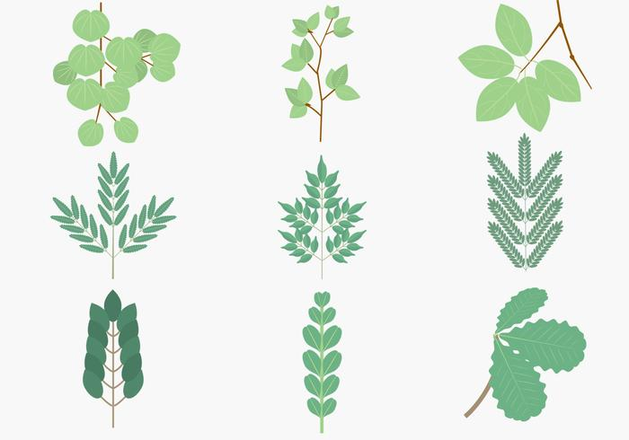 Green Leaves Branches Vector Pack