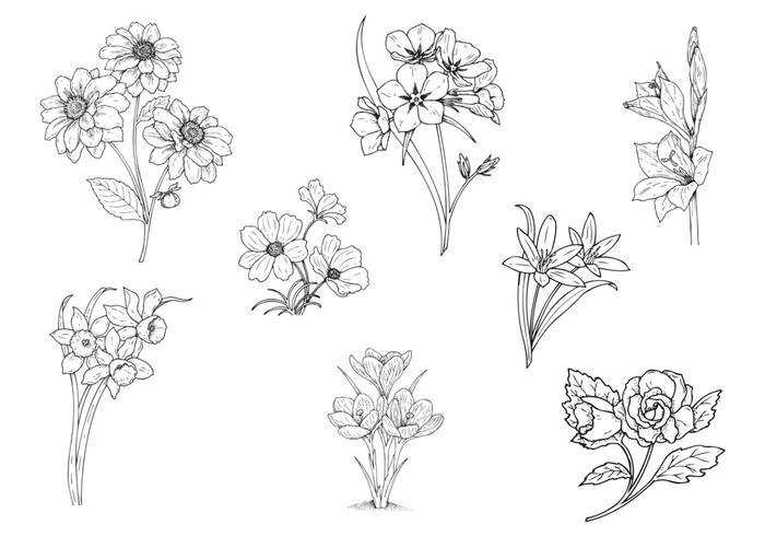 Pacote de vetores de flores desenhadas à mão dois