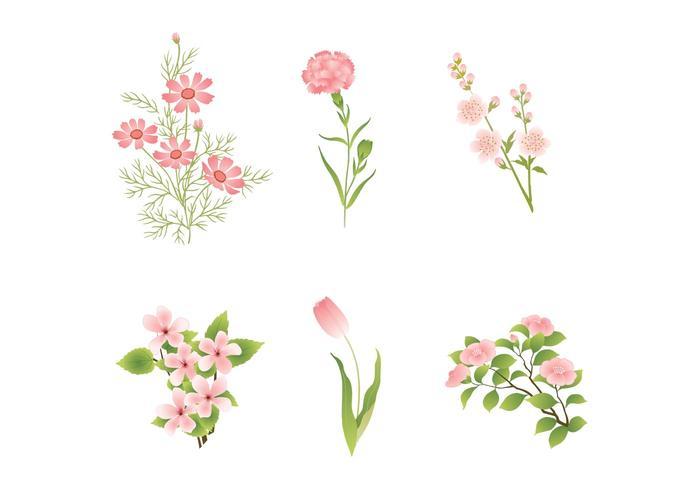 Various Pink Flower Vectors