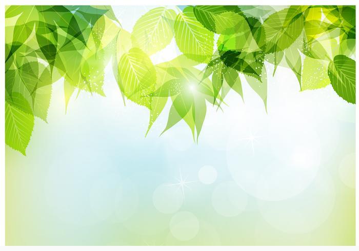 Bokeh Spring Leaves Vector Background
