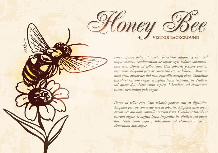 Honey Bee Background Vector
