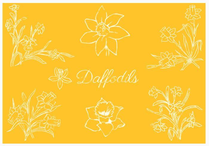 Daffodil Vector Pack