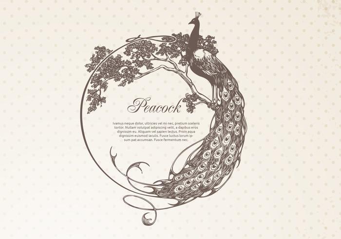 Hand Drawn Peacock Frame Banner Vector