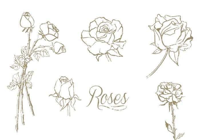 Hand Drawn Roses Vector Set