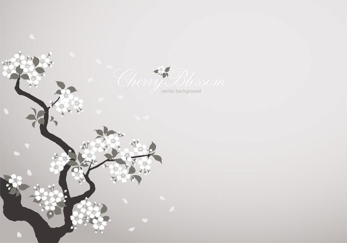 White Cherry Blossom Background Vector