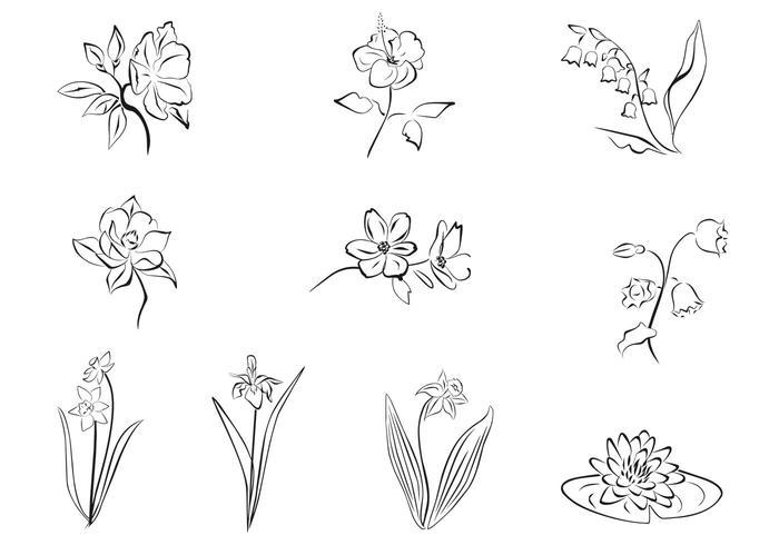 Drawn Flower Vector Set