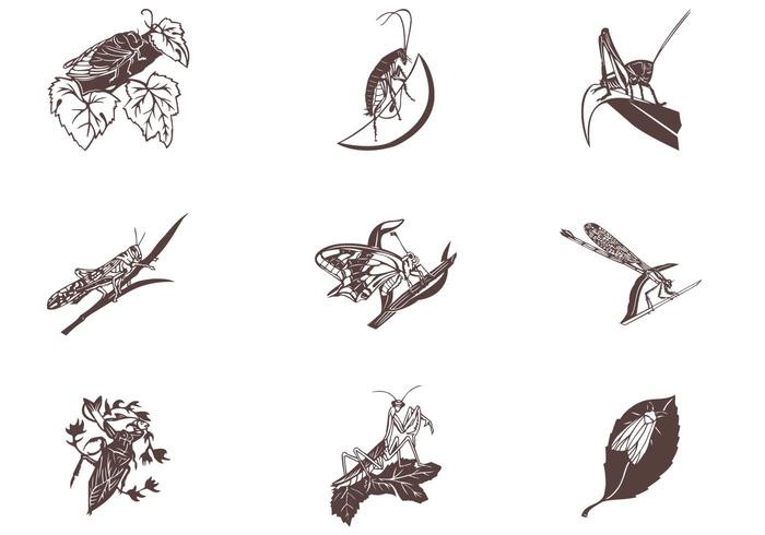 Insects on Leaves Vector Set