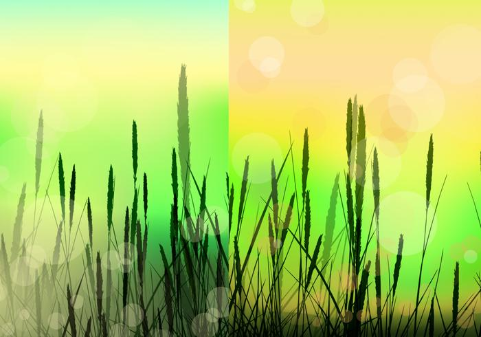 Bokeh Reed Background Vector Pack