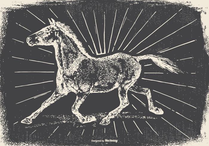 Vintage Horse Illustration
